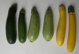 زراعة وخدمة نباتات الكوسا