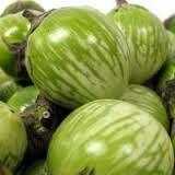 الشكل (5) ثمار باذنجان خضراء مخططة