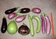 الشكل (7) بعض أشكال وألوان ثمار الباذنجان