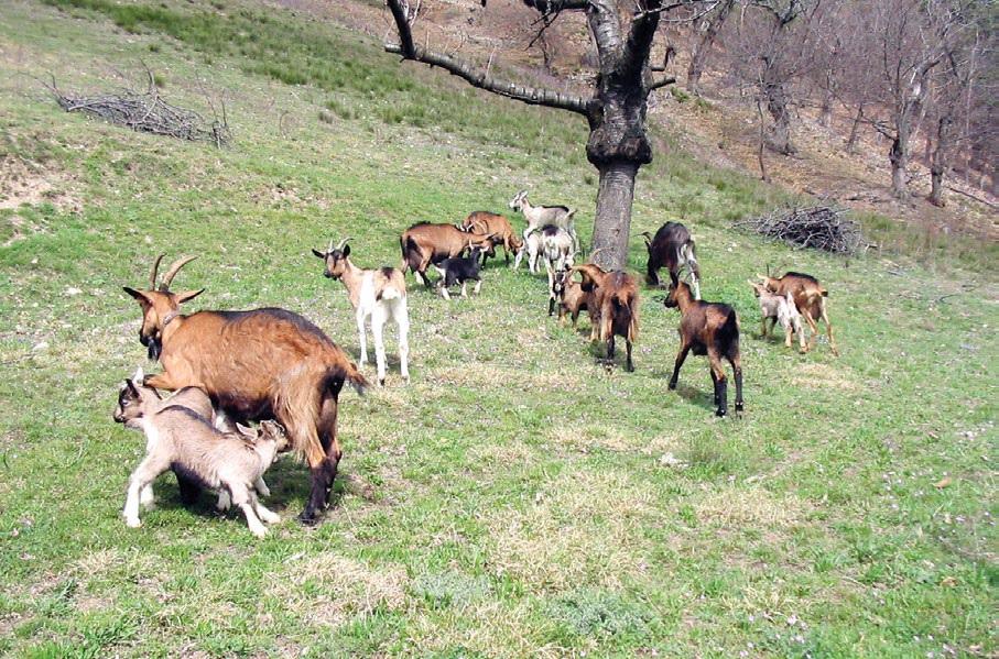 الرفق بالحيوانات المنتجة للغذاء.. يزيد من إنتاجيتها